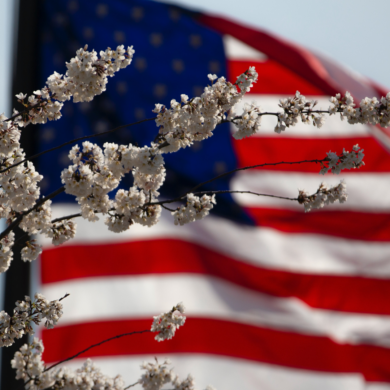 Stock image of a cherry blossom and US flag